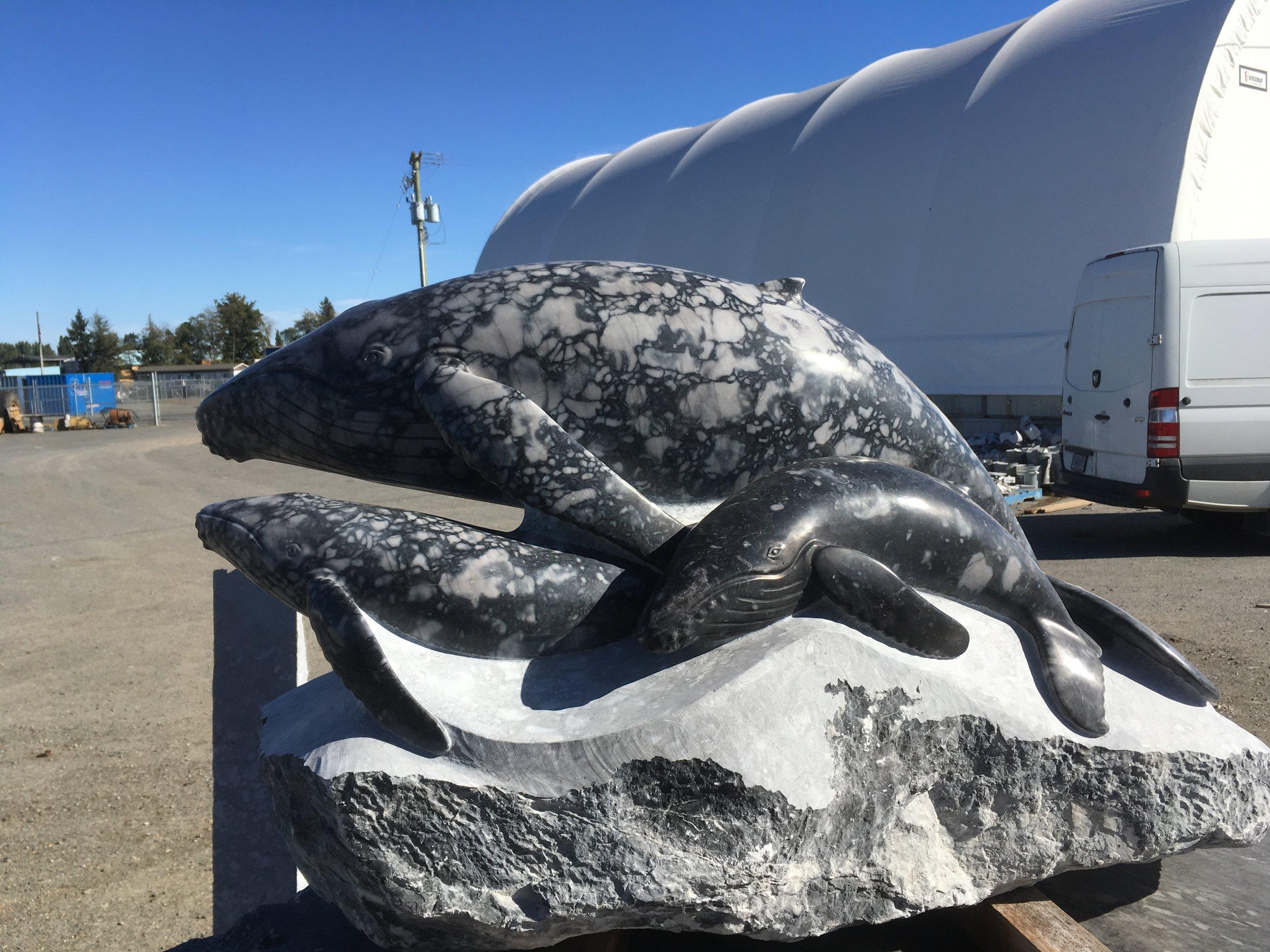 Wild Humback Whales