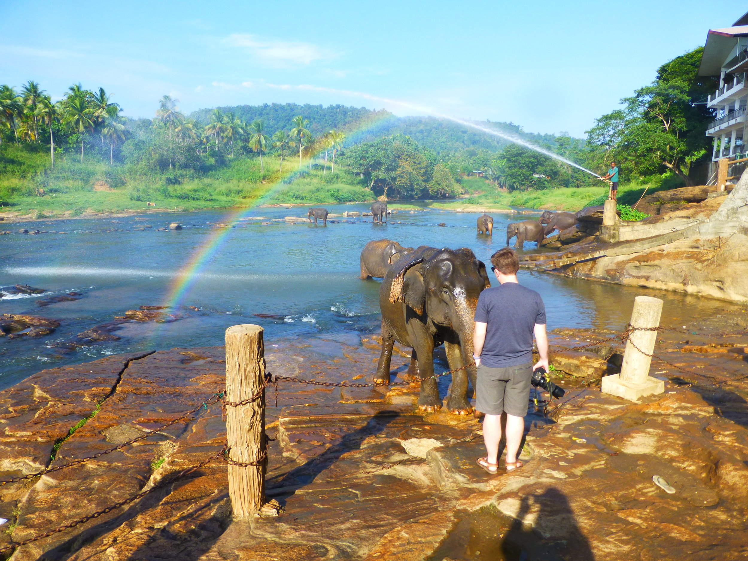 Connecting with an elephant at Pinnawala. Photo: Elizabeth Freeman.