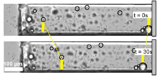 """You can't pump fluid in a pore that is closed off -- a """"dead end pore"""". But you can use chemically-driven transport to cause flow. Here, oil drops come out, and particles go in.  Permission from Kar et al, """"Enhanced Transport into and out of Dead-End Pores,"""" ACS Nano, 9, 746-753 (2015)."""