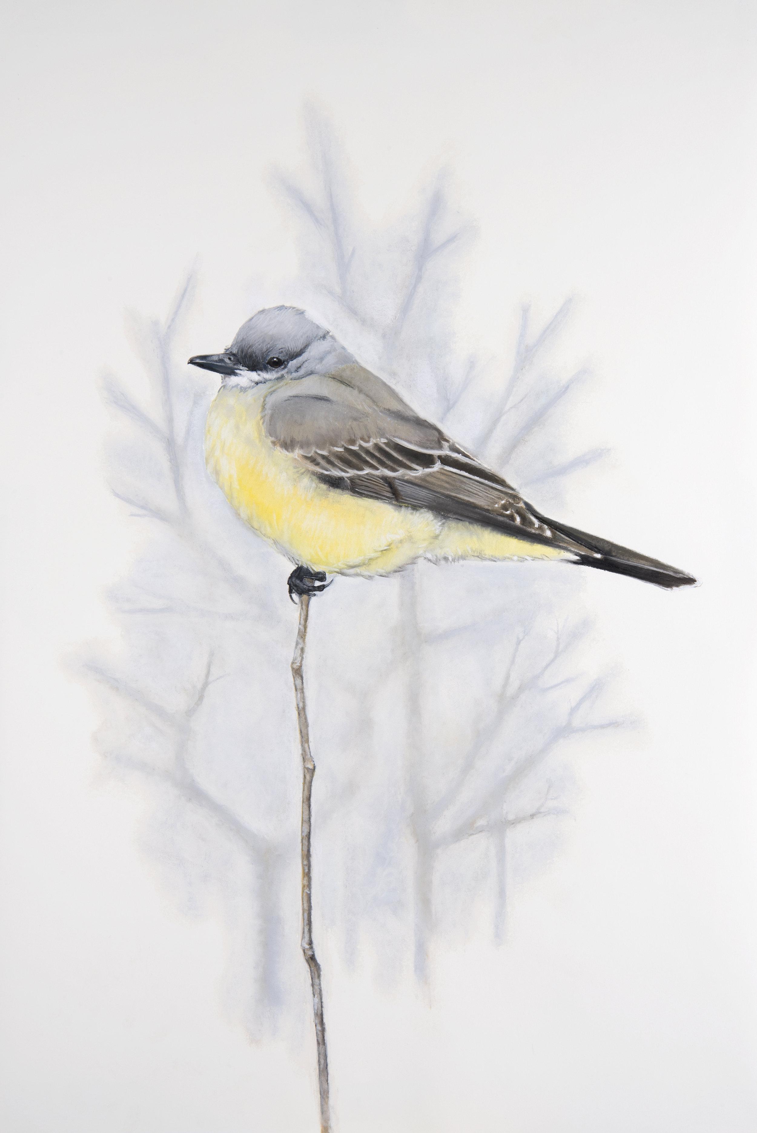 finalcassinskingbird_1.jpg