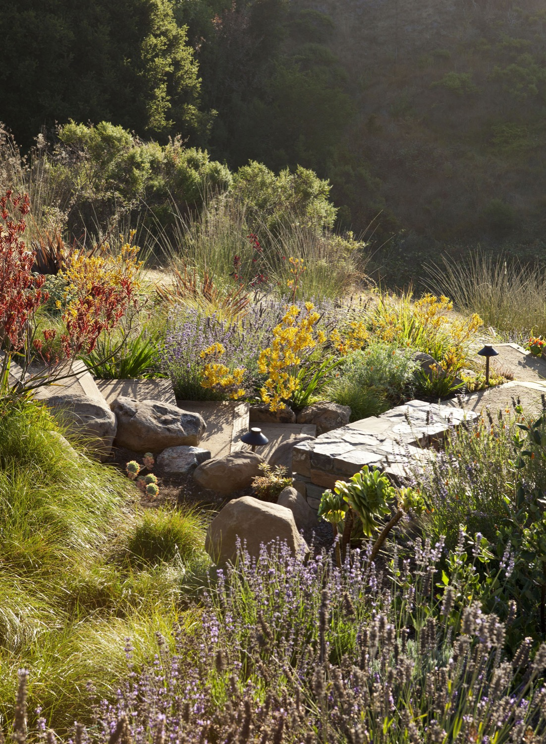 Boulders were reused after being excavated onsite, and now sit amongst colorful plantings.