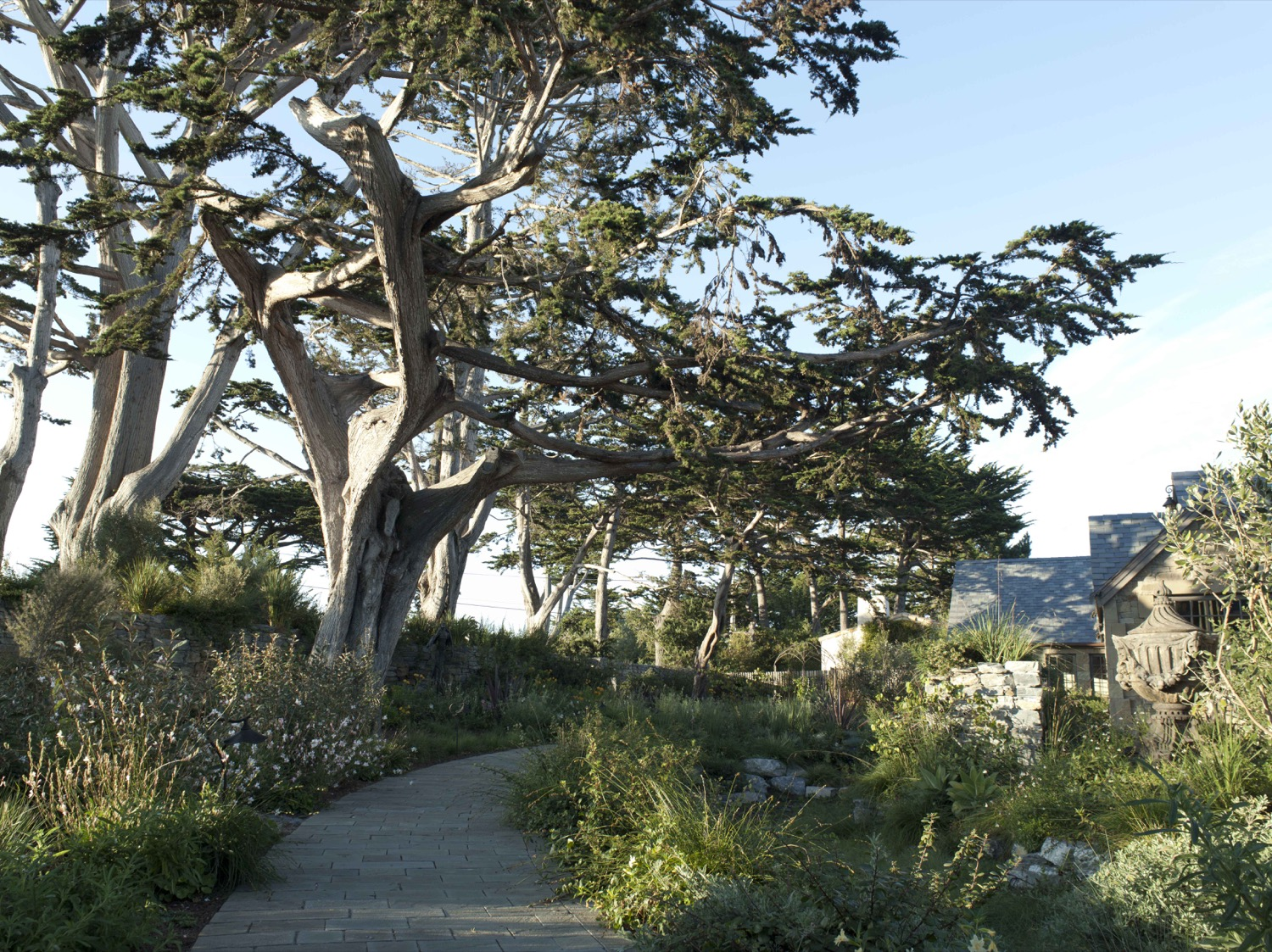 The circular path follows the arrangement of the established Monterey Cypress and provides the organizational structure of the garden layout.