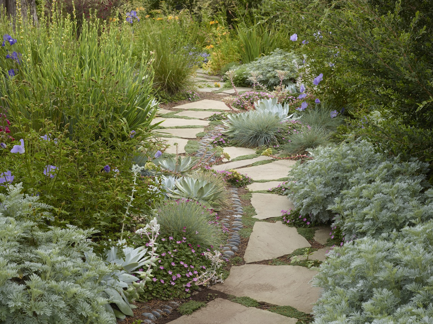 Succulents, soft plantings and pebbles wind along one of the paths.