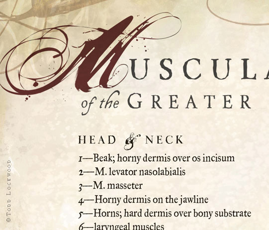 musculature_det03.jpg