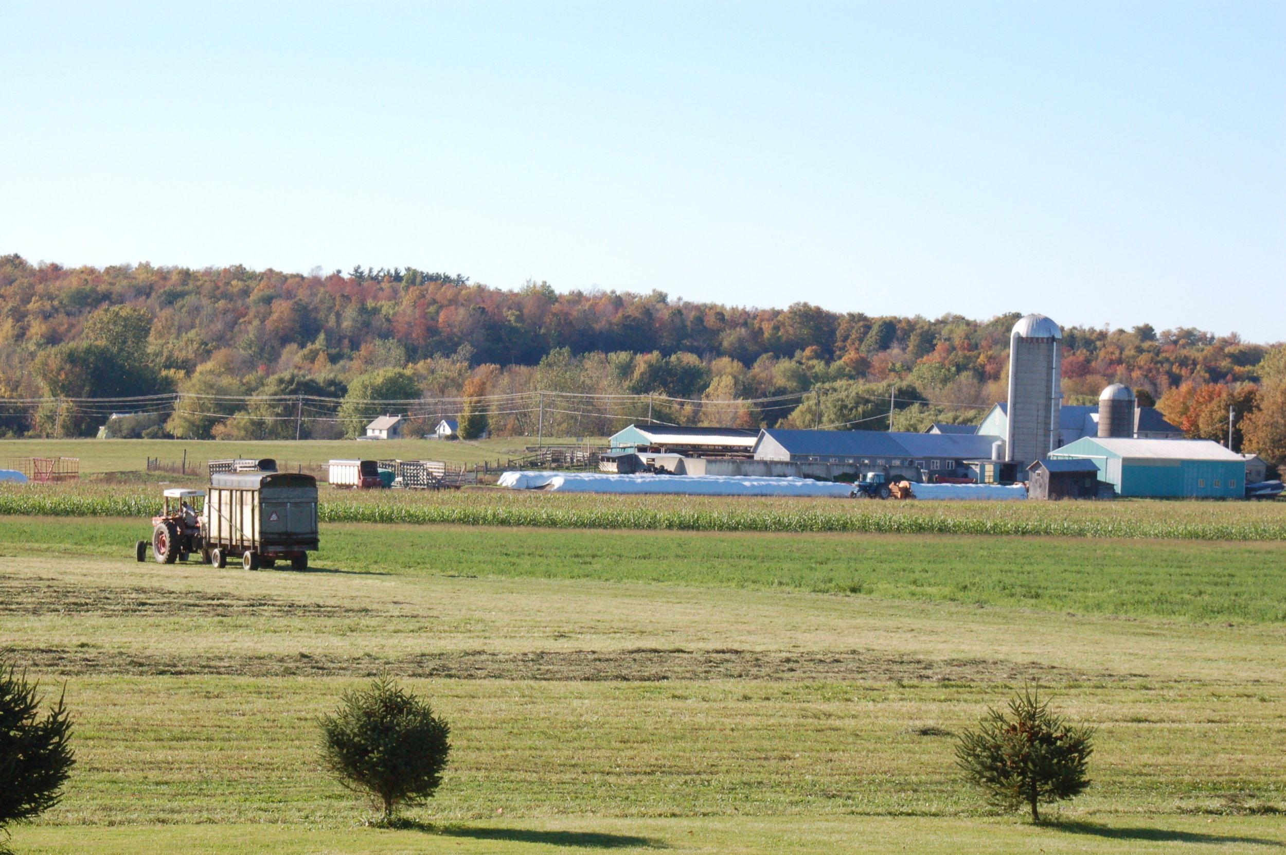 Haying at Islandacres Farm