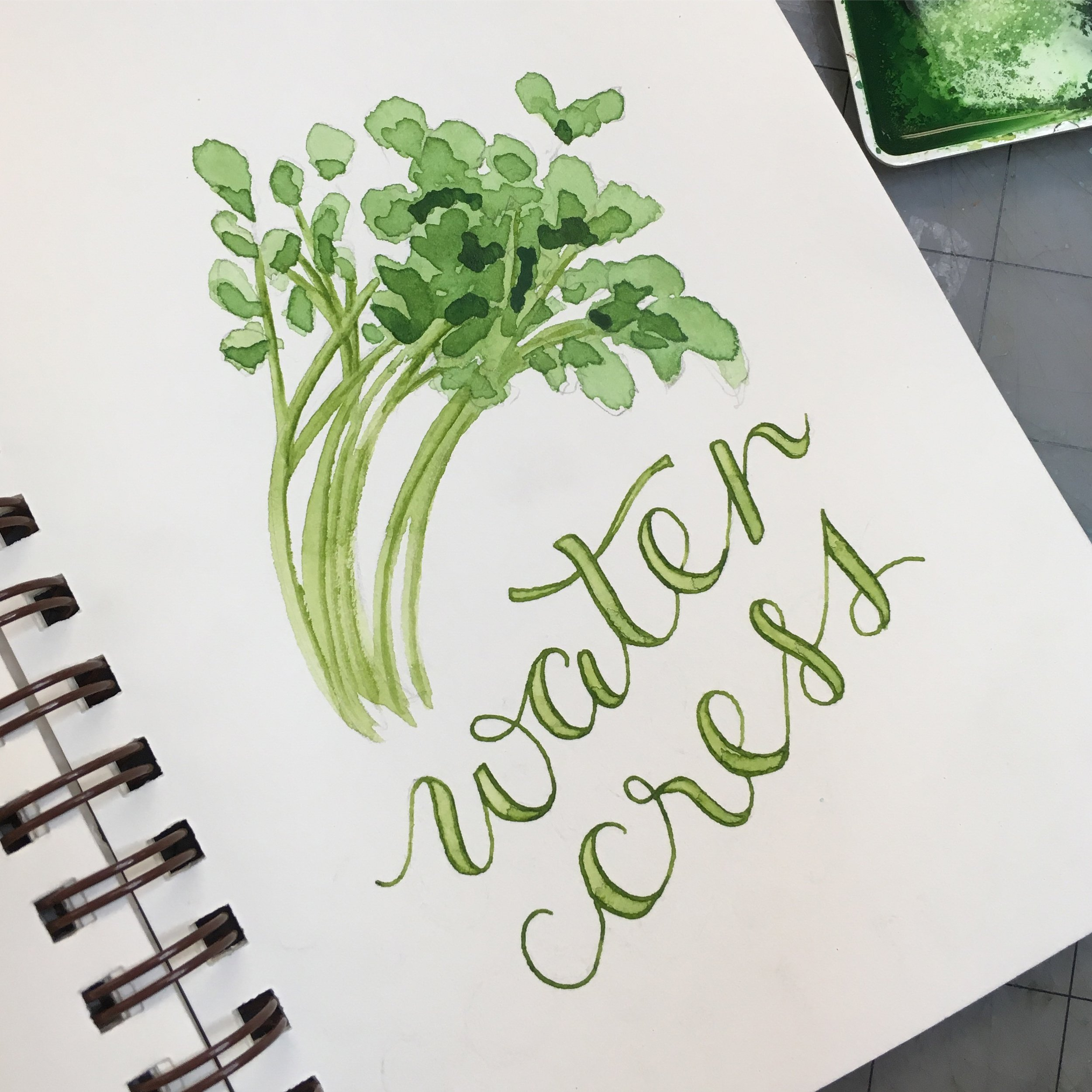 Water Cress, watercolor © Denise Ortakales