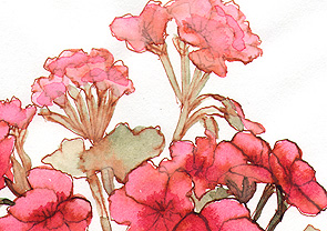 Geraniums, watercolor © Denise Ortakales