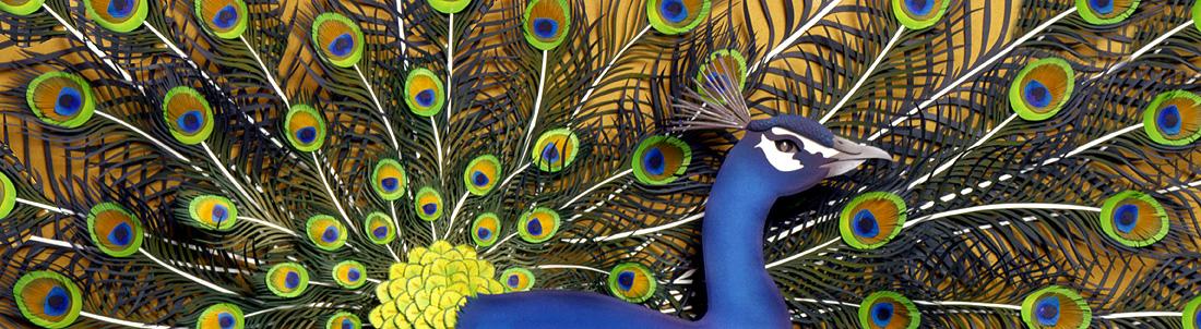 Peacock, paper sculpture © Denise Ortakales