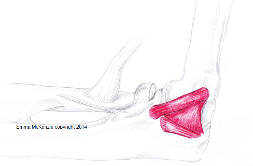 UCL Reconstruction - Prevent Tommy John Injury