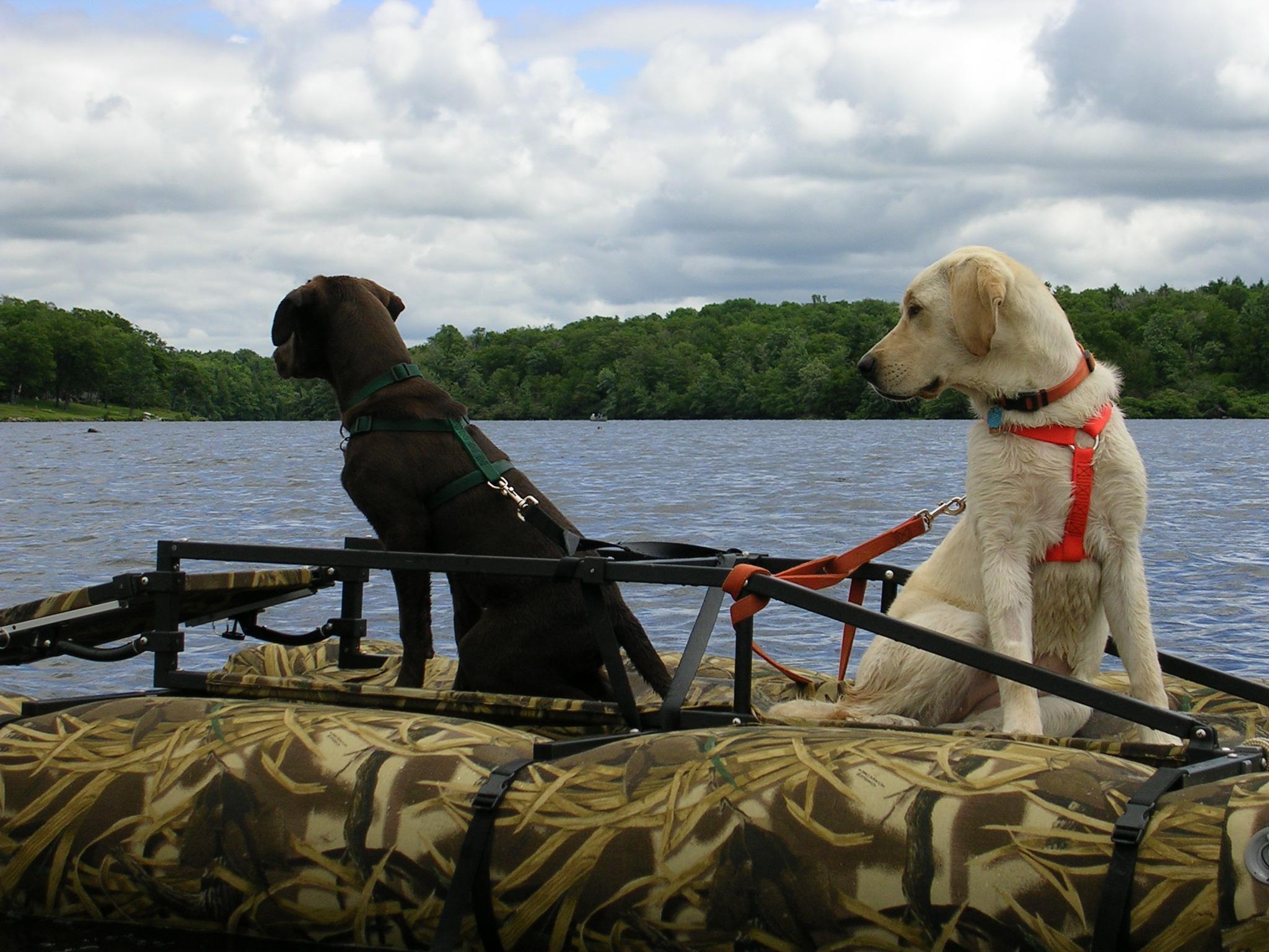 dog boat.jpg