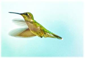 hummingbird-1024x704.jpg