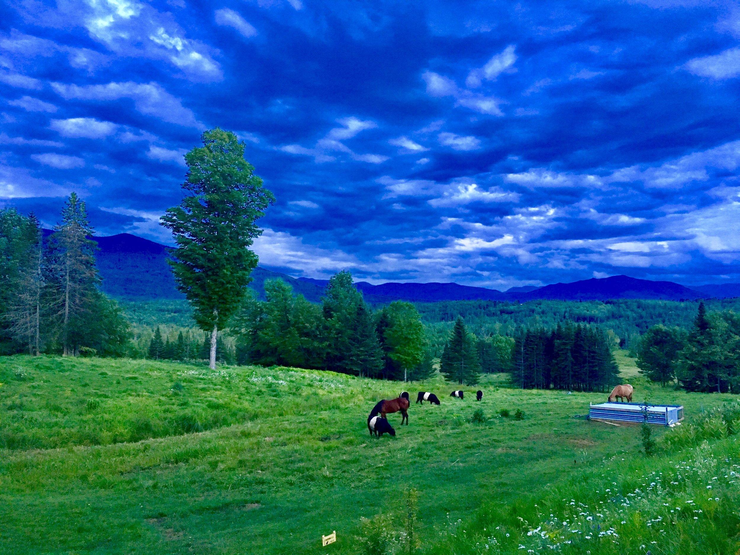 horse pasture.jpg