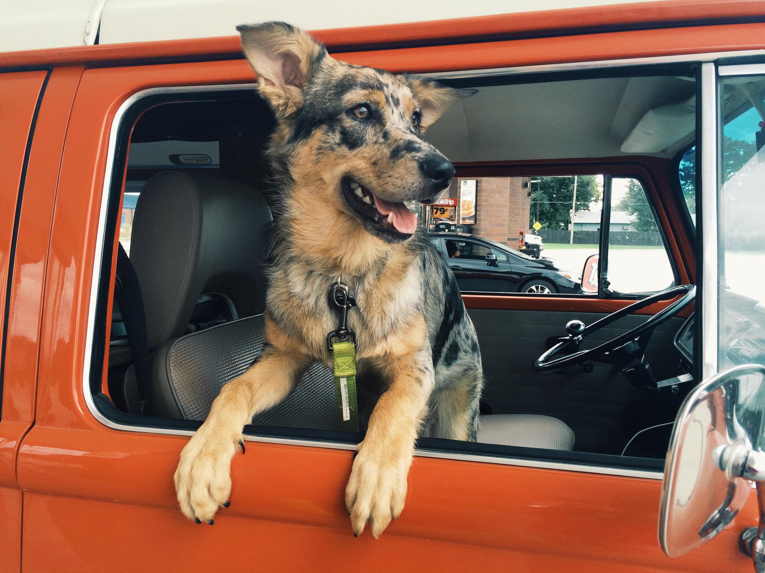 Beryl the road dog.
