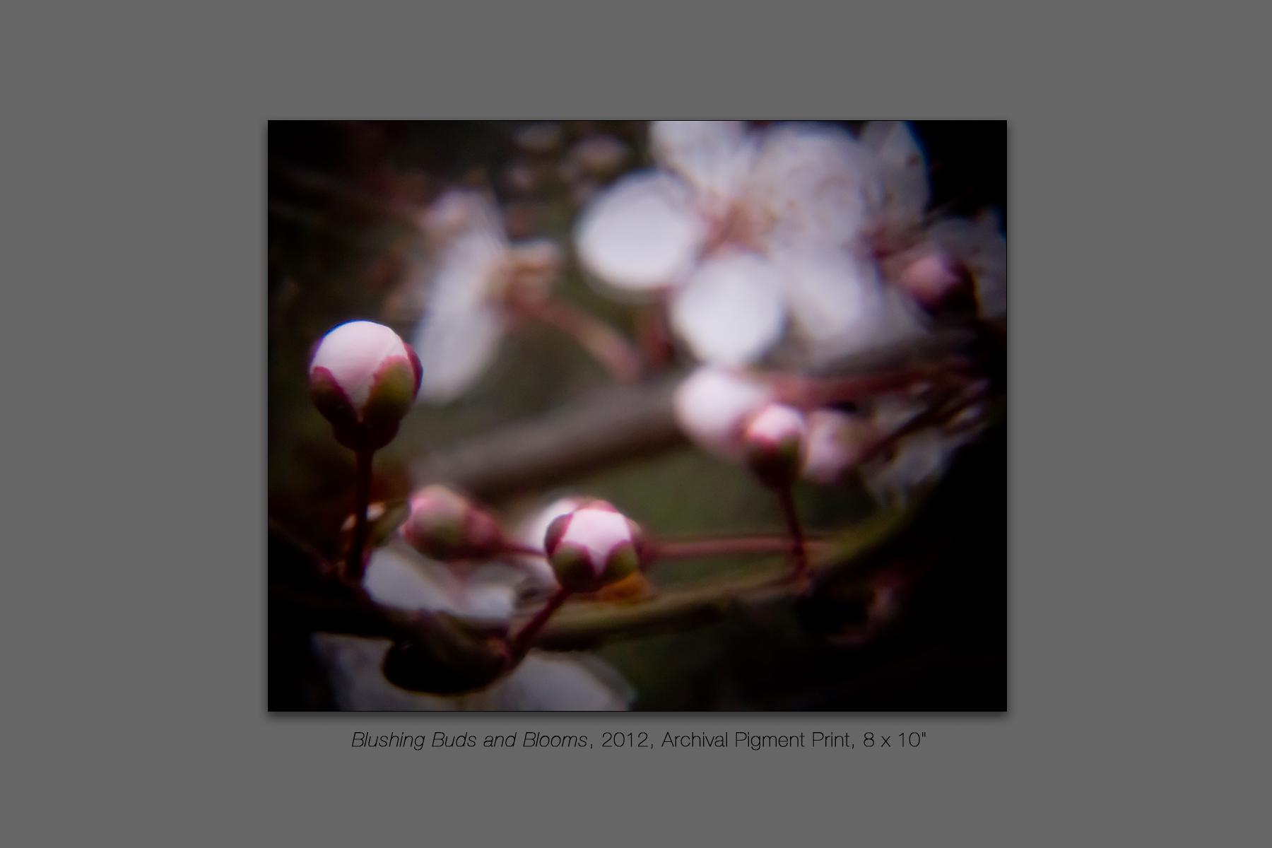 Blushing Buds and Blooms, 2012