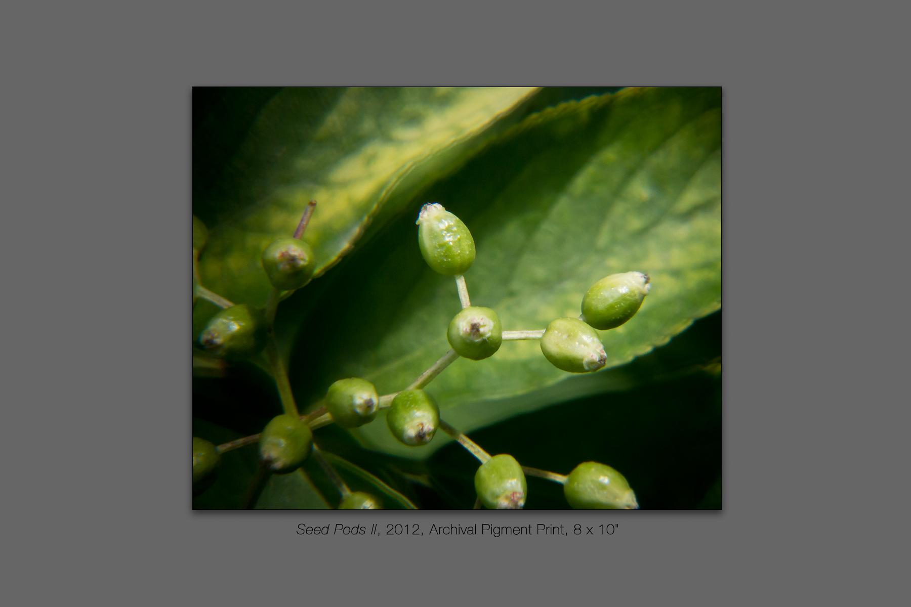 Seed Pods II, 2012