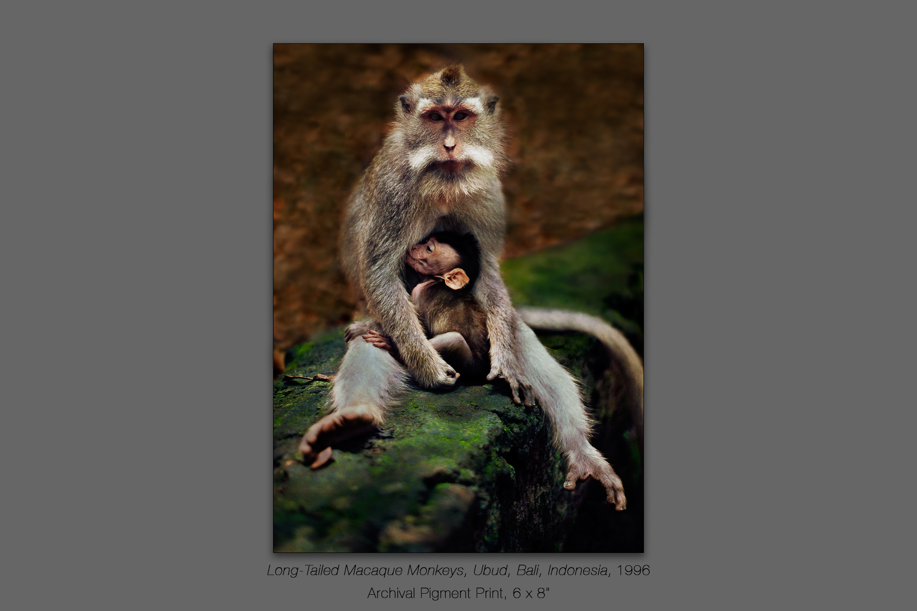 Long-Tailed Macaque Monkeys, Ubud, Bali, Indonesia, 1996