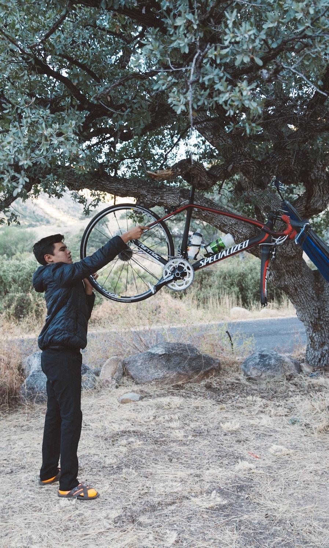 Tree bike shop Mt Lemmon