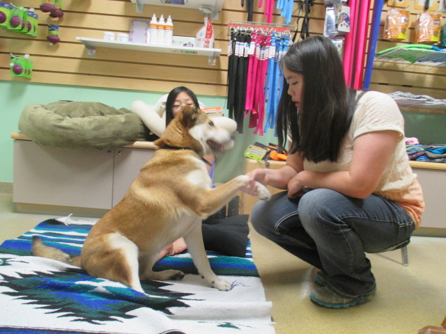 Shaking hands/paws with a dog at Northwoods Humane Society.