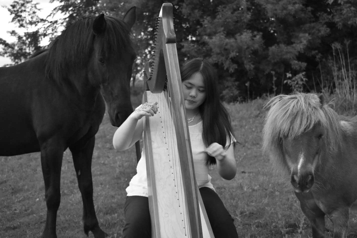 My horses: Bailey (left) and Hoss (right) listening to me play the harp.