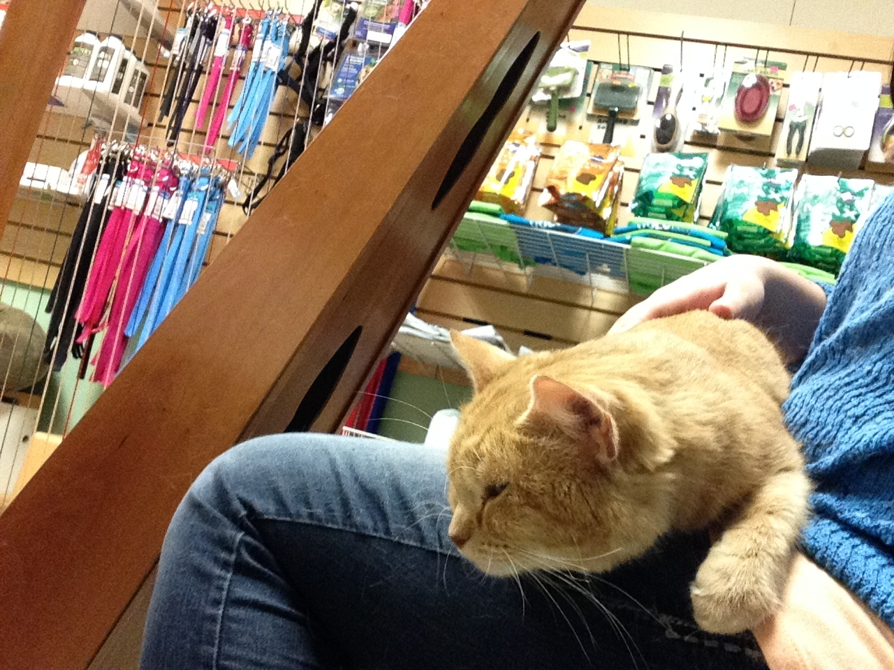 A cat relaxing on my lap at Northwoods Humane Society.
