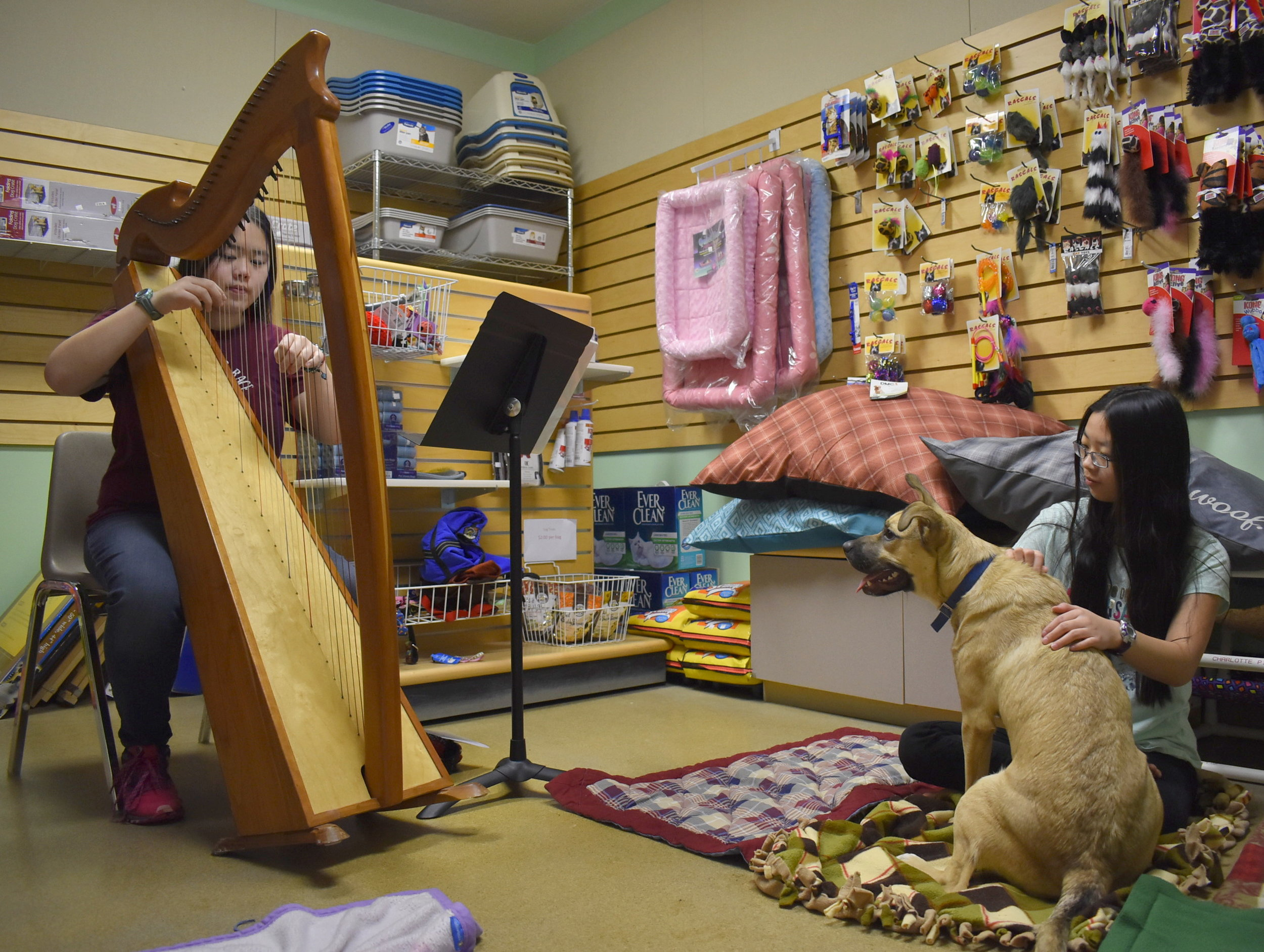 Prescott, an 8-month old puppy, intrigued with the harp and Sophia's music.