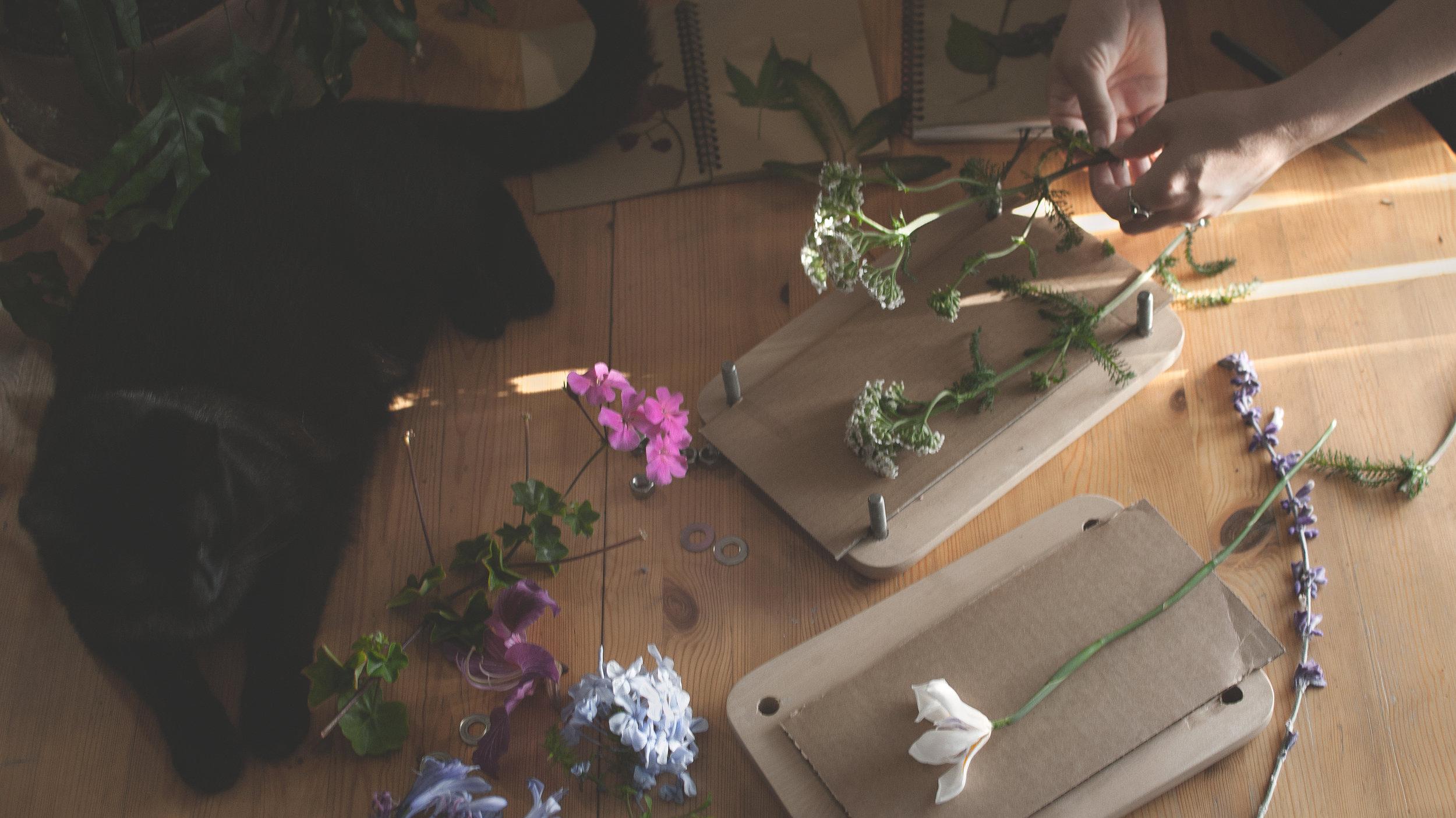 flower pressings arrangements