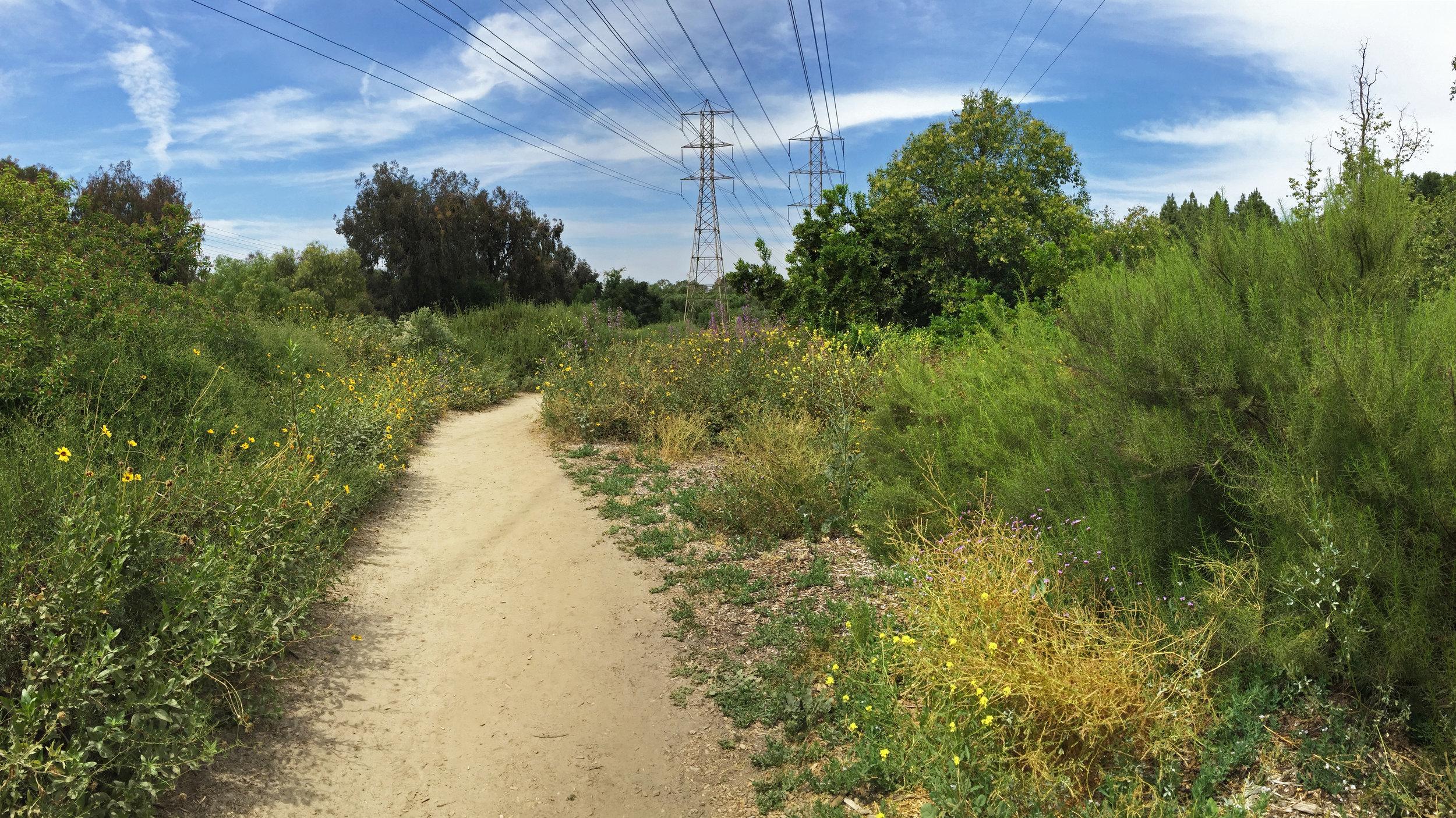 El Dorado Nature Center in Long Beach, CA