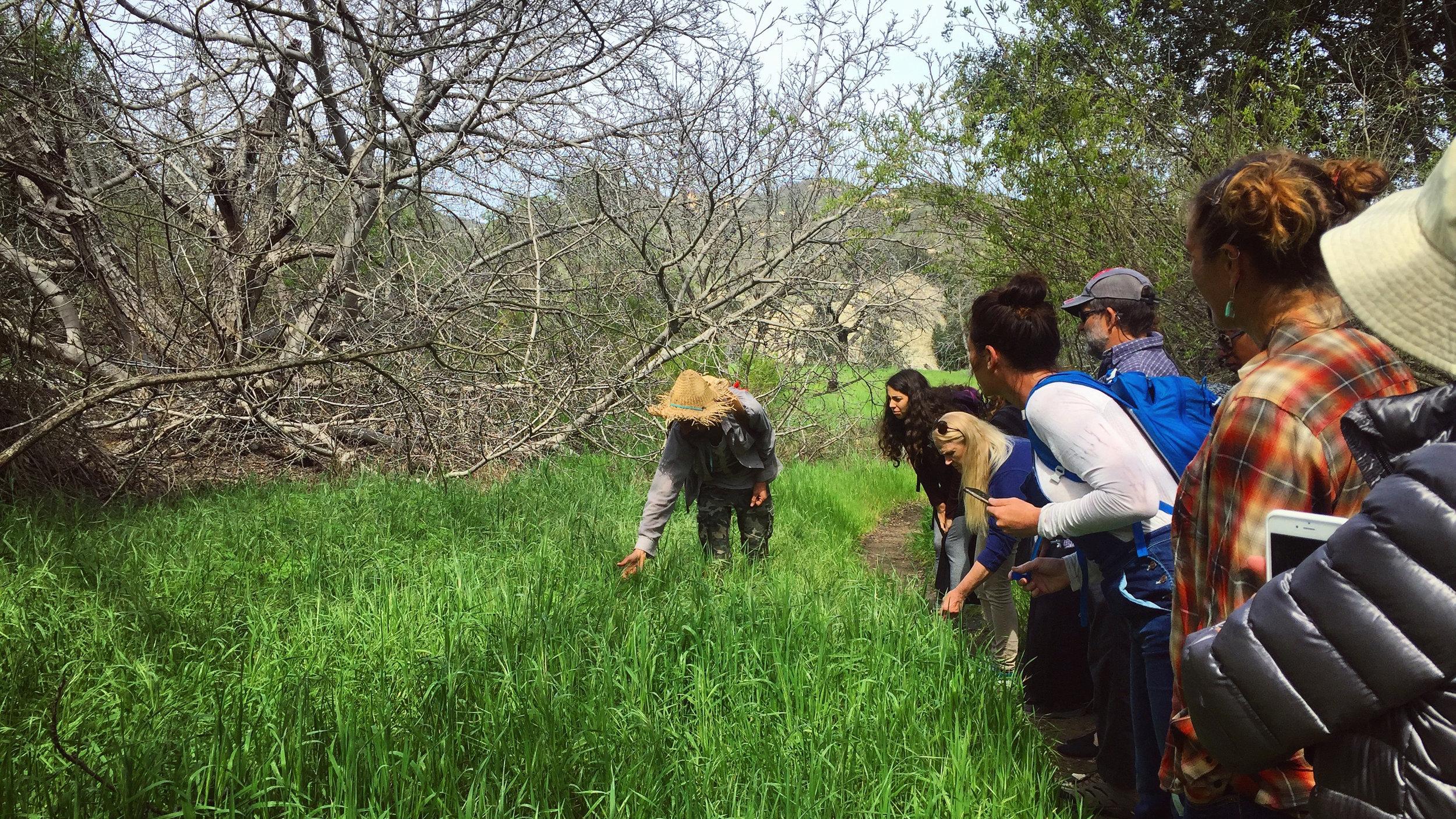 Herbal walk in Laguna Coast Wilderness Park, Laguna Beach, CA