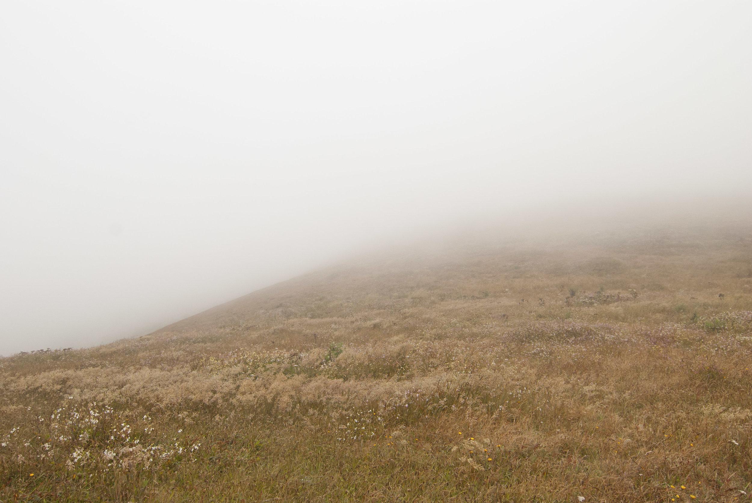Tule Elk Reserve Fog