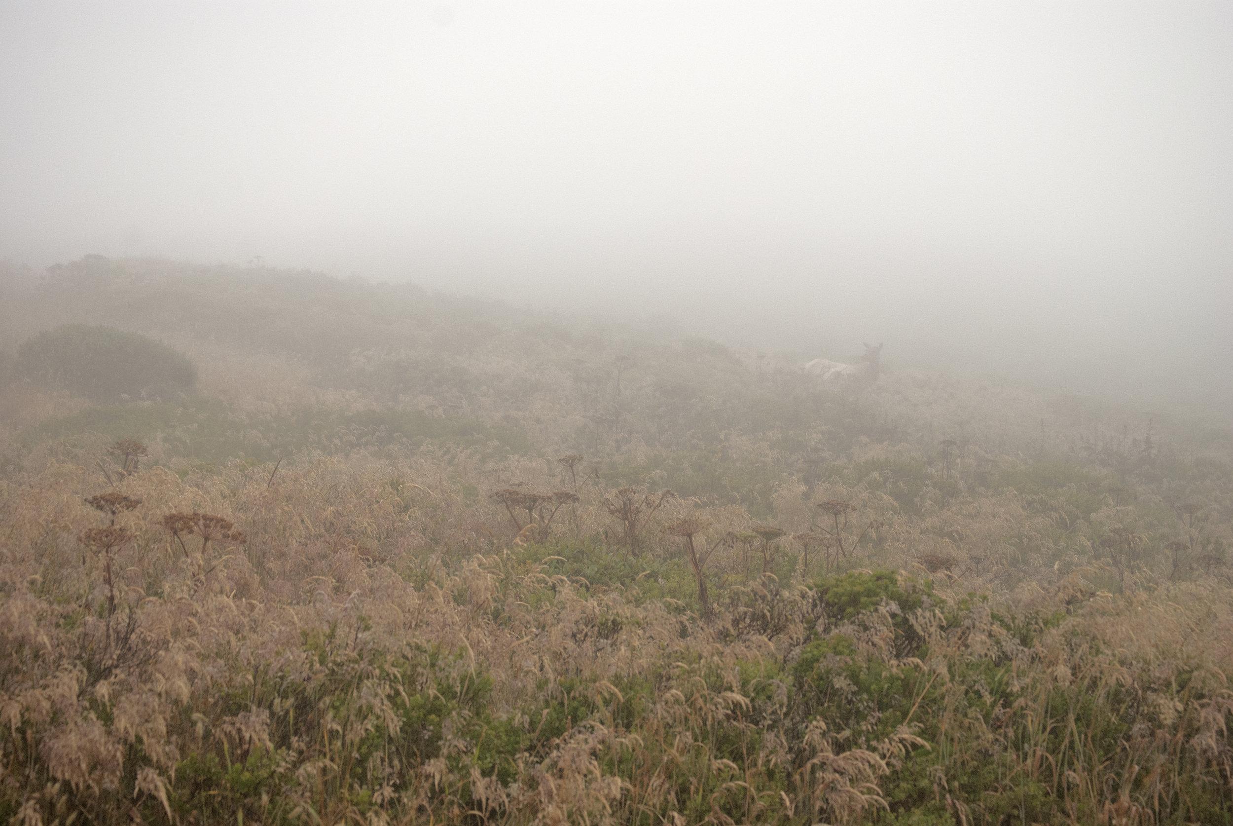 Elk in the fog.