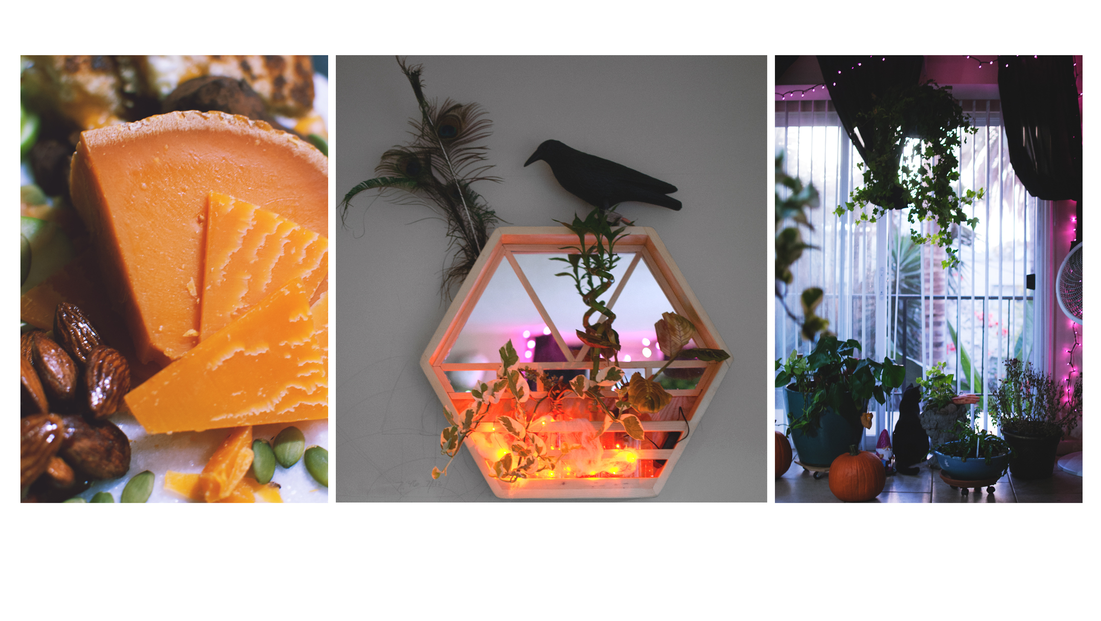 Halloween at home: Mimolette, Wall Planter, Houseplants.