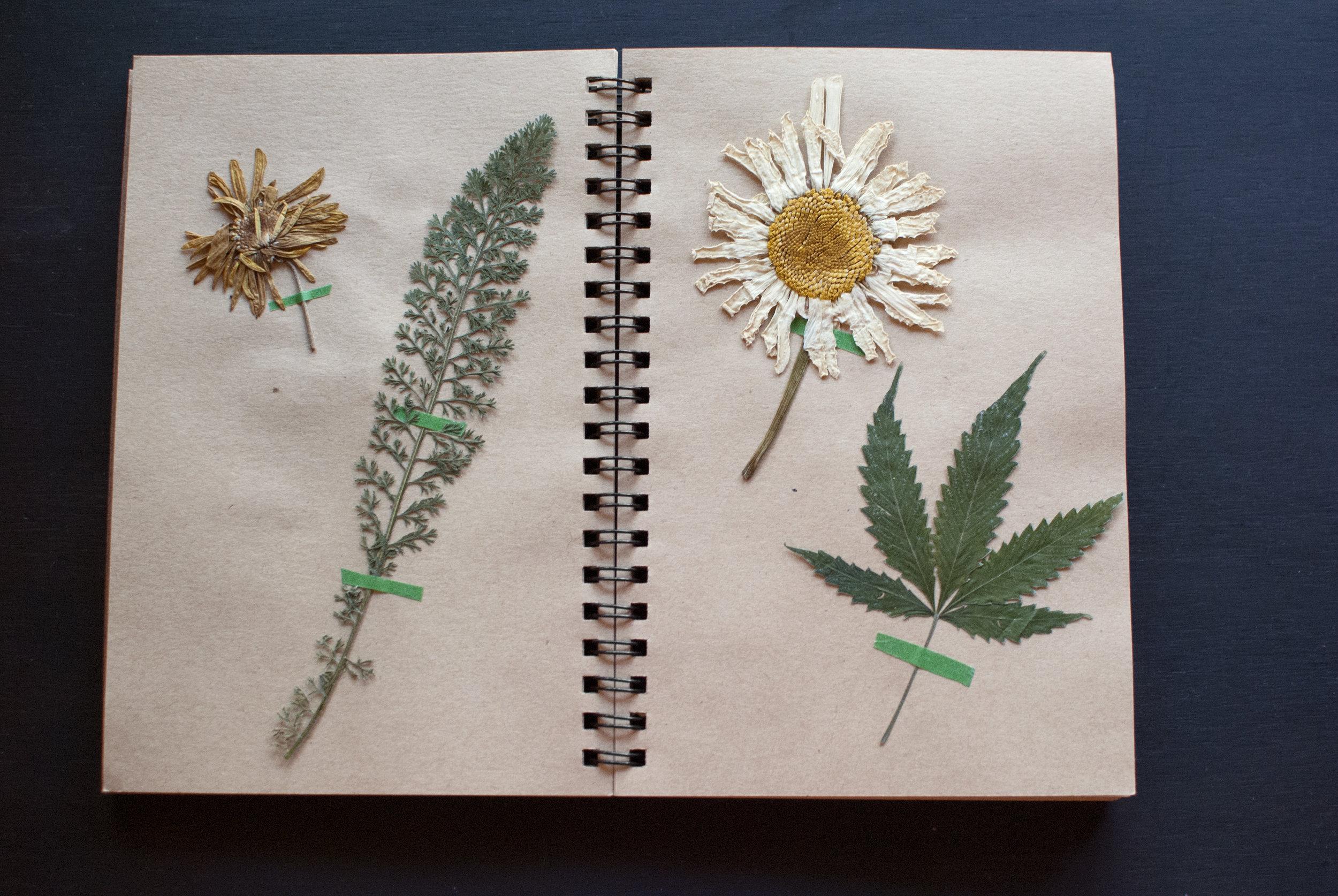 flowerbook_page2.jpg