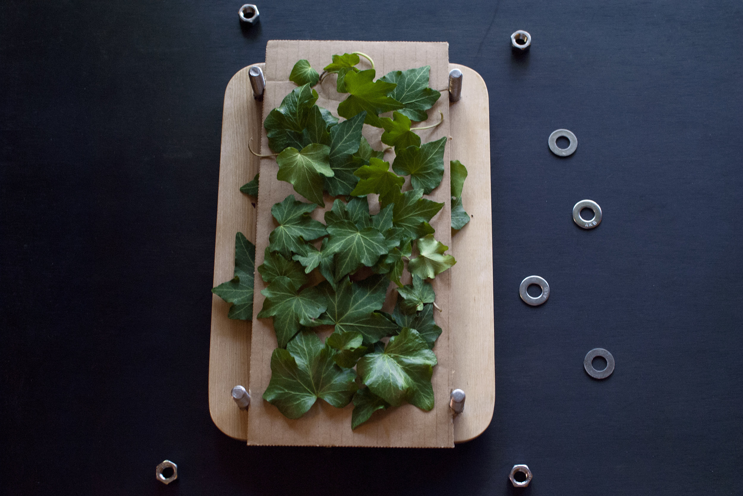ivyplantpress.jpg