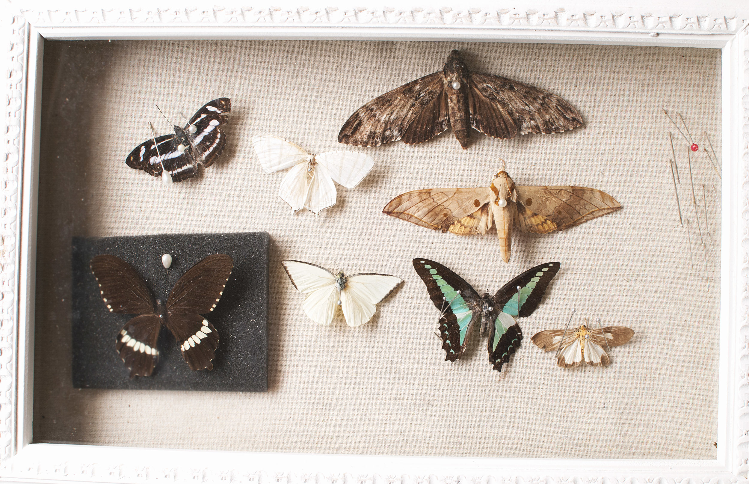 Butterflies pinned to a board. I found the shadow box at a yard sale in my neighborhood.