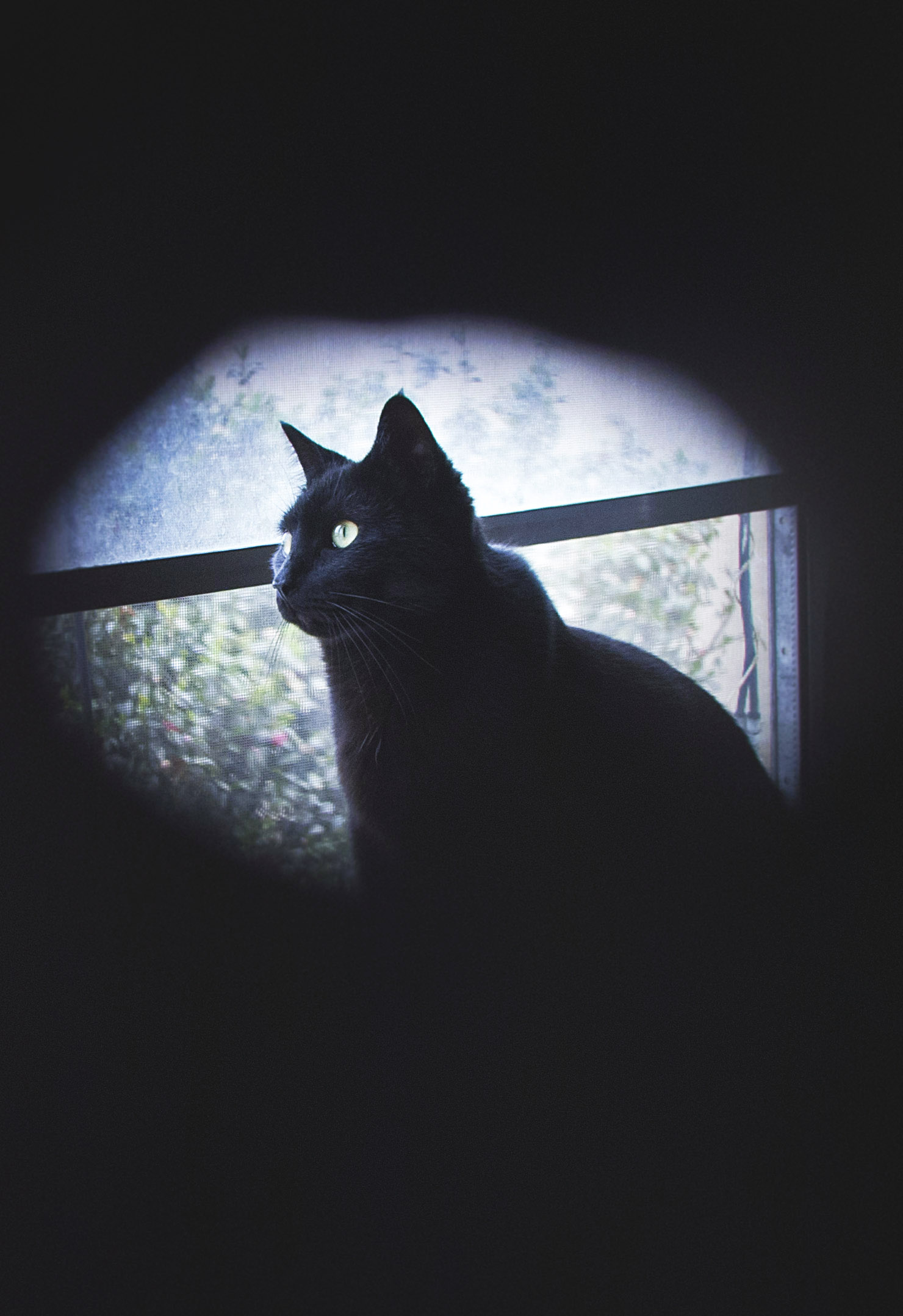 A peek through the hag stone... a black cat!