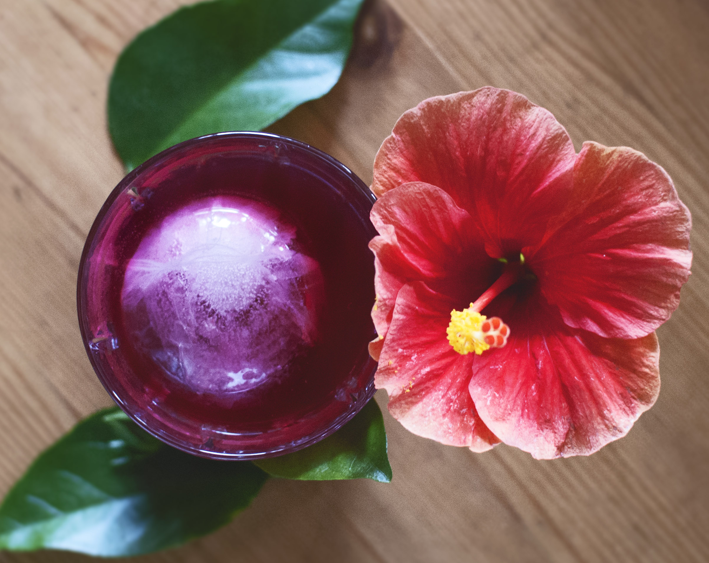 Hibiscus Elderflower Iced Tea + the flower of a  Hibiscus rosa-sinensis
