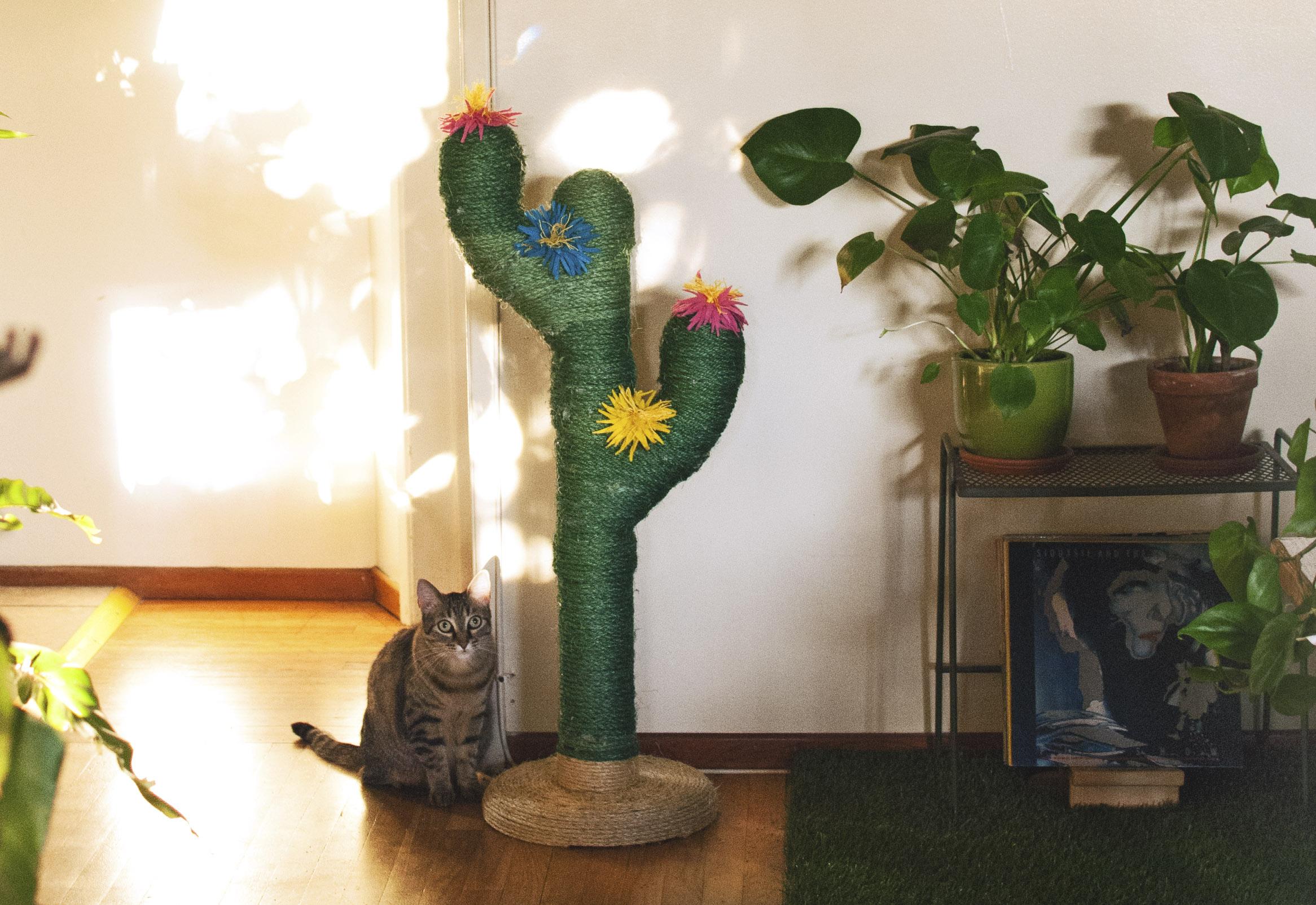 cactus5.jpg