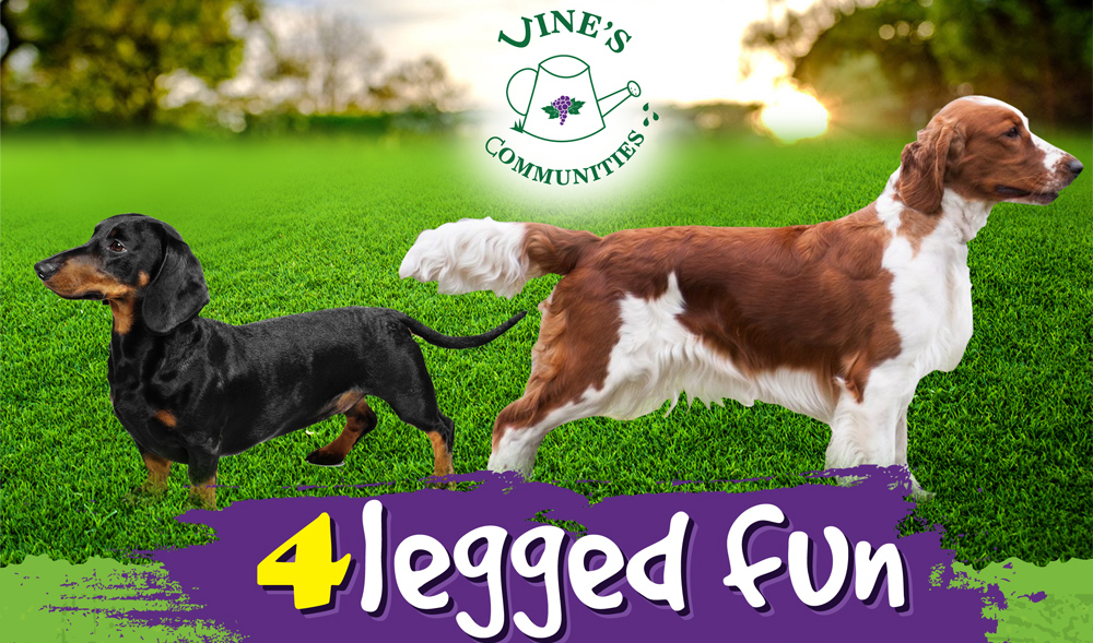 4 legged fun banner1.jpg