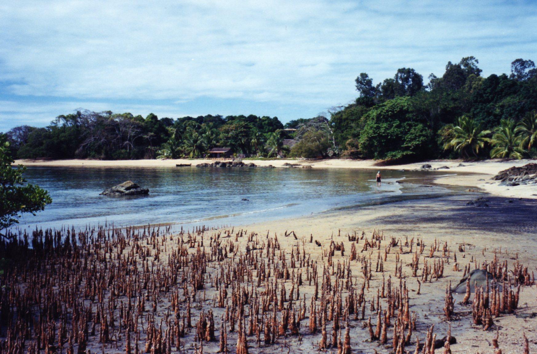 Mangrove swamp Nosy Komba