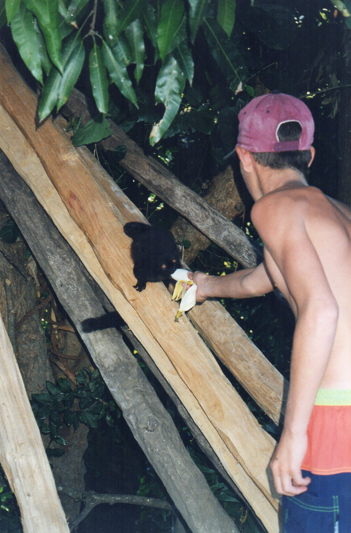 They feed the lemurs on Nosy Be too