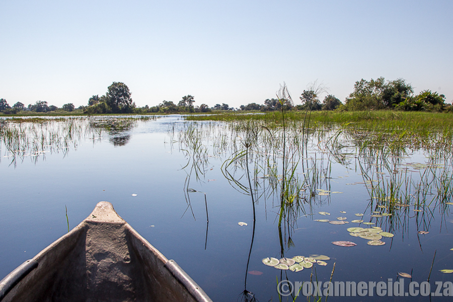 Mokoro trip from Xigera Camp in the Okavango Delta, Botswana