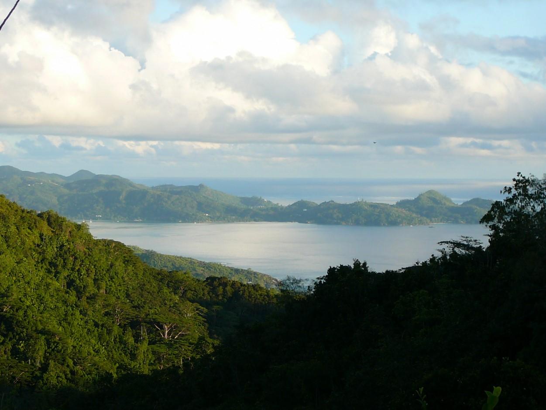 View near tea plantation