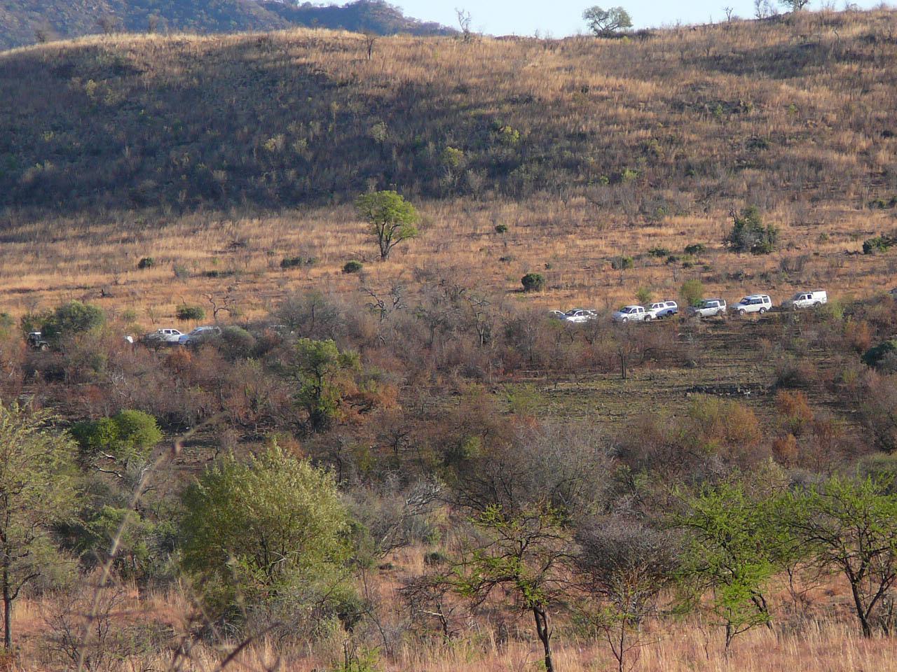 Traffic jam in Pilanesberg watching a lion