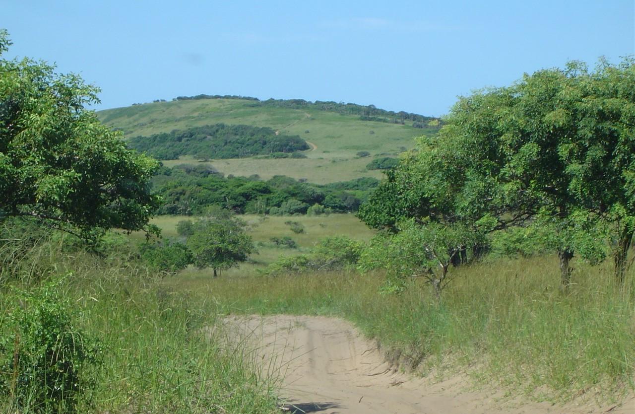 Hill at Fredrico Bay