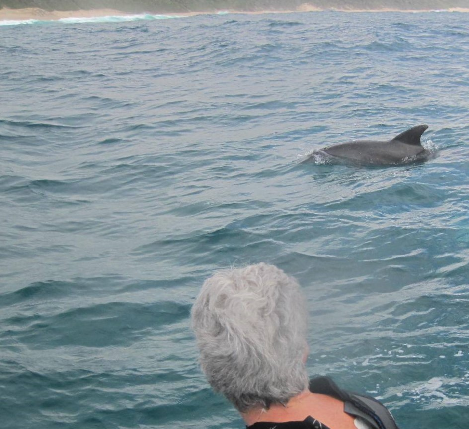 Awesome moments seeing the dolphins