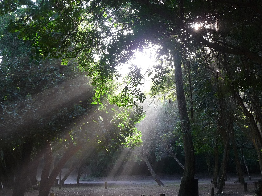 Humidity in sunbeams Mozambique.JPG
