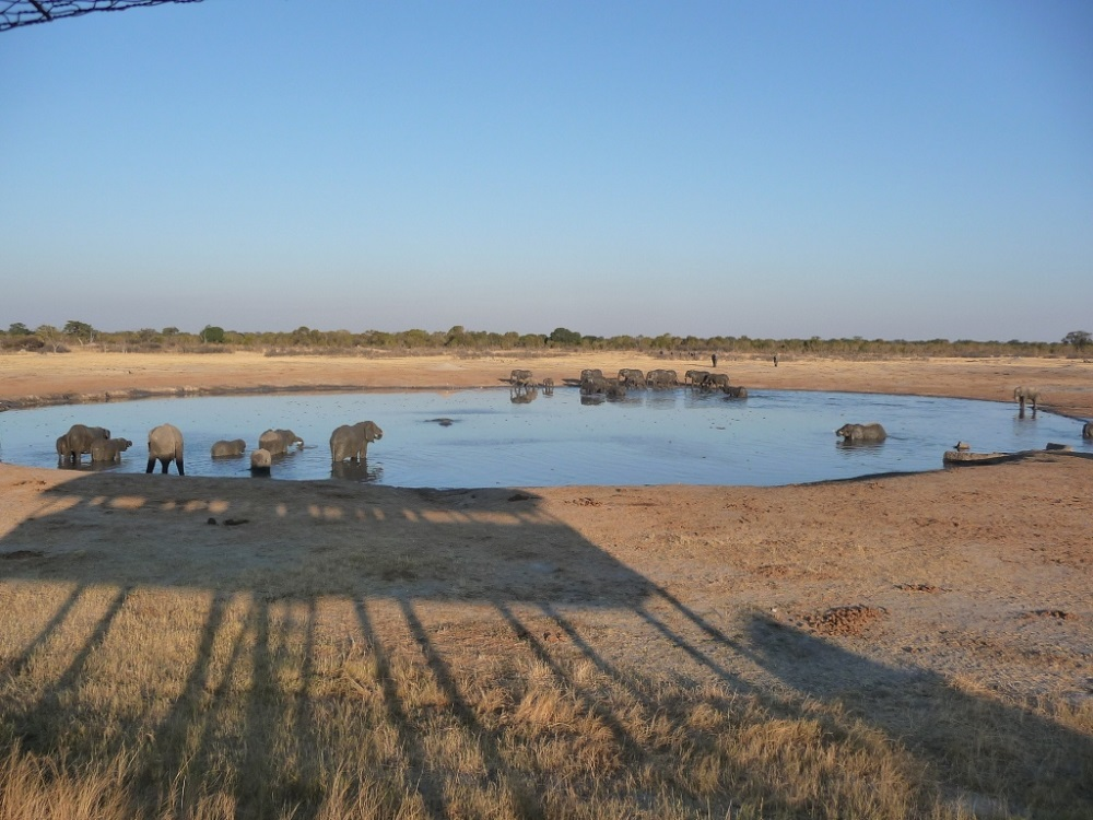 Elephant herds at the water hole Hwange