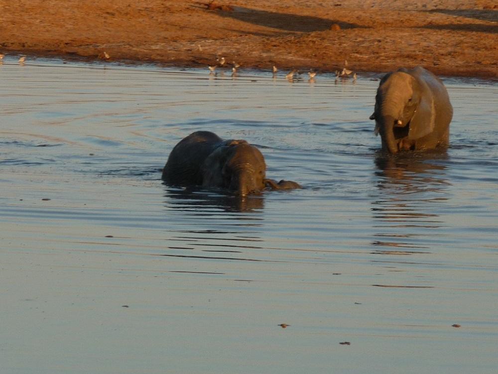 Roaming Fox Hwange elephants 16.JPG