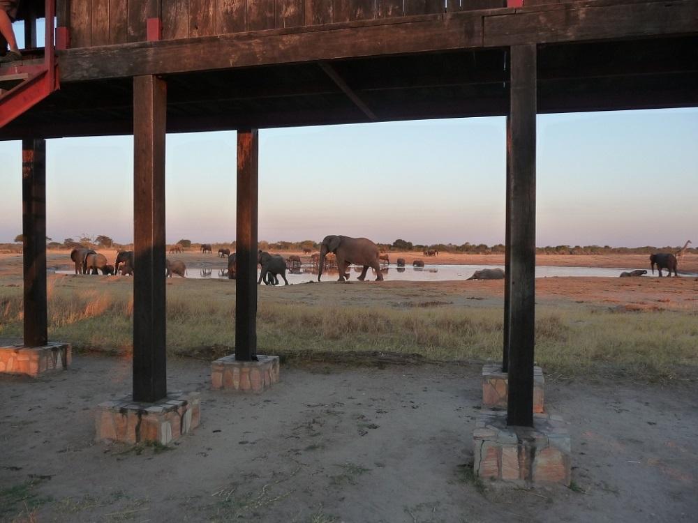Roaming Fox Hwange elephants 18.JPG