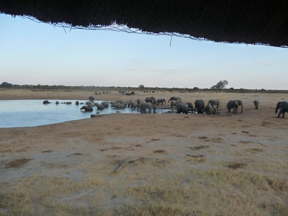 Roaming Fox Hwange elephants 25.JPG